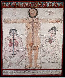Three anatomical figures